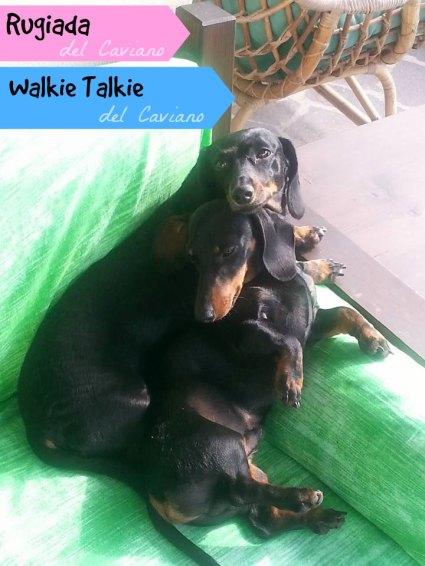 Chloe & Walkie